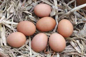 1283293_eggs
